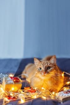 Nette ingwerkatze, die im bett mit glänzenden glühlampen und geschenken des neuen jahres im kraftpapier liegt. gemütliches zuhause weihnachtsferien.