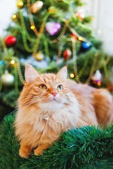 Nette ingwerkatze und weihnachtsbaum. flauschige lustige haustier sitzt vor neujahr dekoriert furtree. gemütlicher urlaub mit.