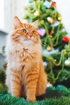 Nette ingwerkatze und weihnachtsbaum