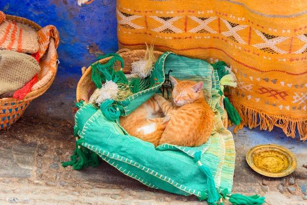 Nette ingwerkatzen, die in einem korb in einem souvenirladen schlafen