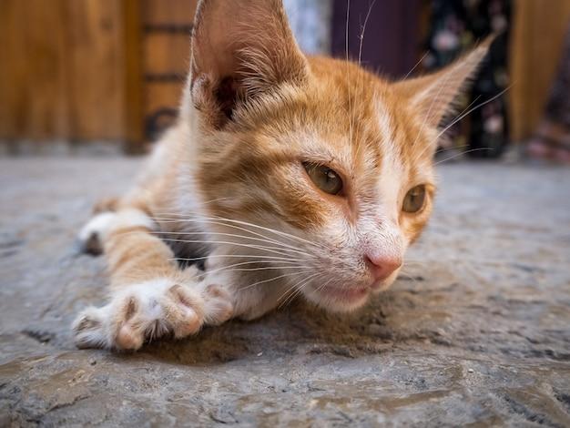 Nette inländische orange katze, die auf dem boden mit einem unscharfen hintergrund liegt