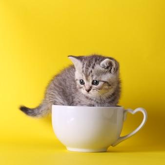 Nette kätzchen, die nach innen in den pastellbehältern auf gelbem hintergrund sitzen