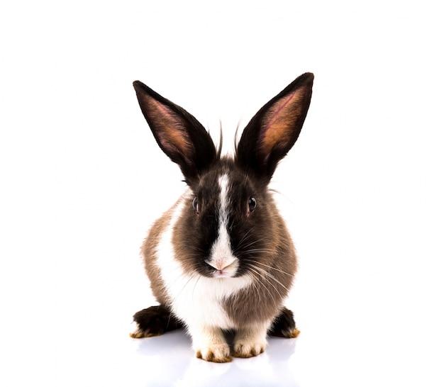 Nette kaninchen auf weißem hintergrund