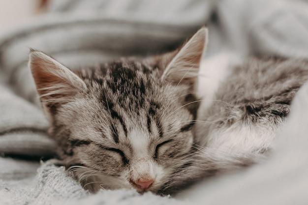 Nette katze der schönen nahaufnahme, stehend auf eine bequeme gemütliche warme art still.