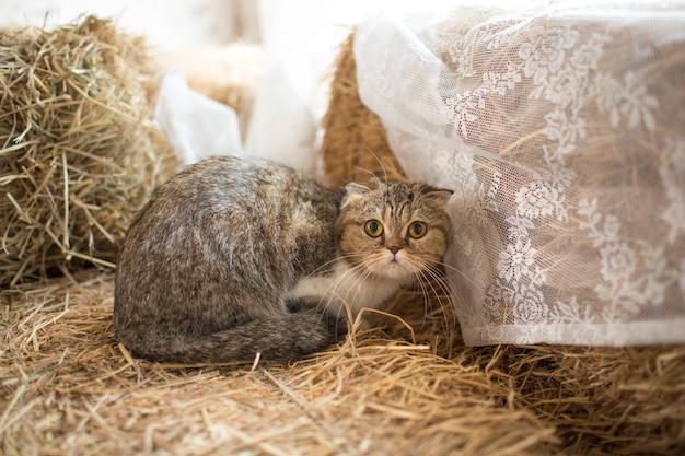 Nette katze, die auf boden liegt