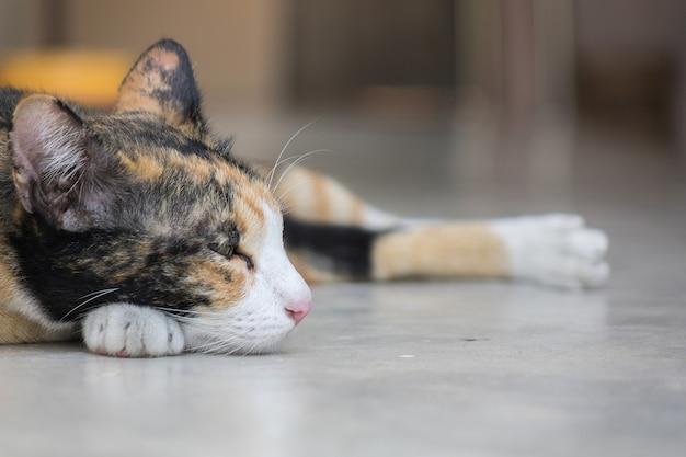 Nette katze, die auf boden schläft.