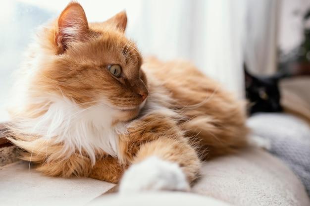 Nette katze, die auf couch legt