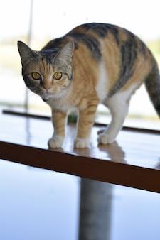 Nette katze, die auf dem balkon steht