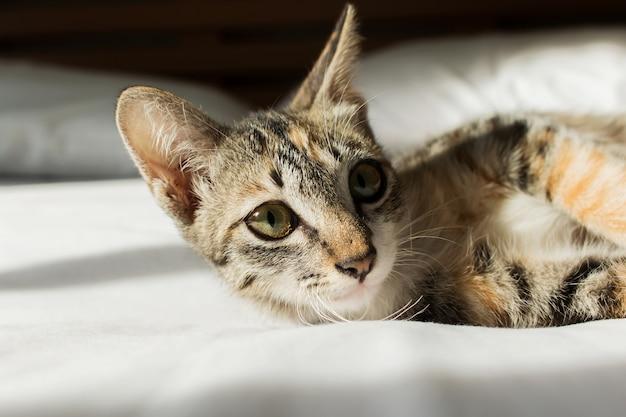 Nette katze, die auf dem bett liegt