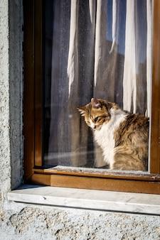 Nette katze, die auf fenster hinter dem glas sitzt und draußen, außenansicht beobachtet.