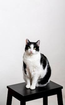 Nette katze, die auf stuhl sitzt