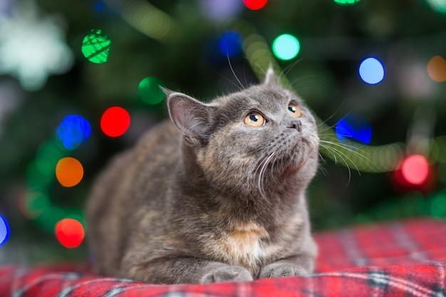 Nette katze, die auf teppich mit weihnachtsdekor liegt