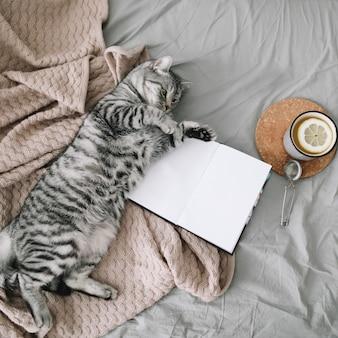 Nette katze, die im bett mit einem buch und einer tasse zitronentee liegt.