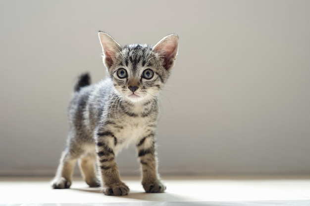 Nette katze, die im raum und im mornig licht steht