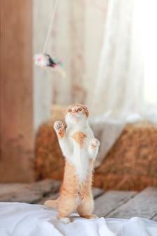 Nette katze, die spielzeug auf boden spielt