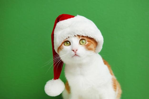 Nette katze in weihnachtsmannmütze auf farbfläche