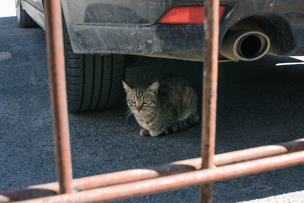 Nette katze liegt unter auto neben schalldämpfer.