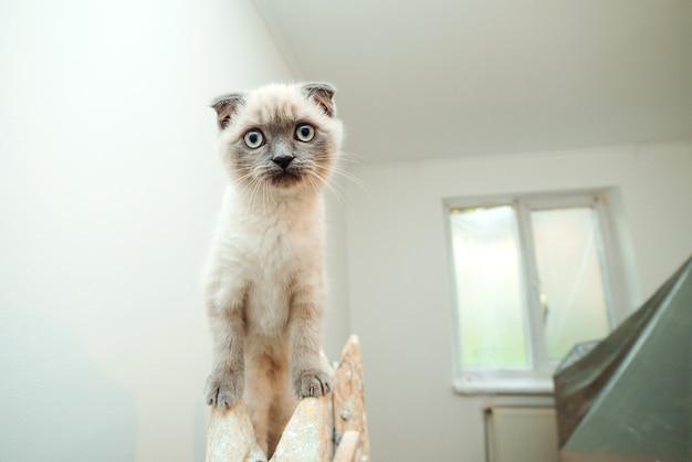 Nette katze sitzt auf der leiter während des renovierungsraums. reparieren, wände streichen, wohnung verbessern.