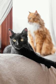 Nette katzen, die drinnen sitzen