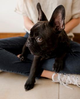 Nette kleine französische bulldogge der nahaufnahme