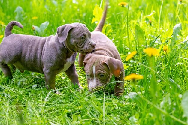 Nette kleine hunde, die unter gelben blumen im grünen gras im park sitzen