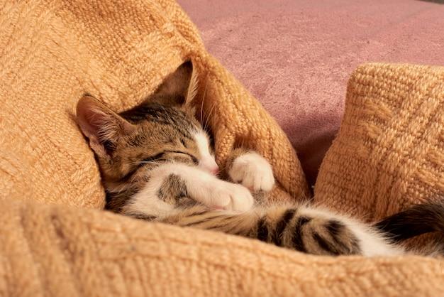 Nette kleine katze, die im bett auf einer decke schläft