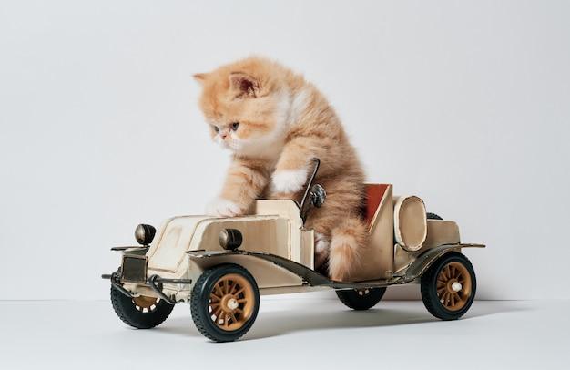 Nette kleine katze, die mit einem autospielzeug spielt