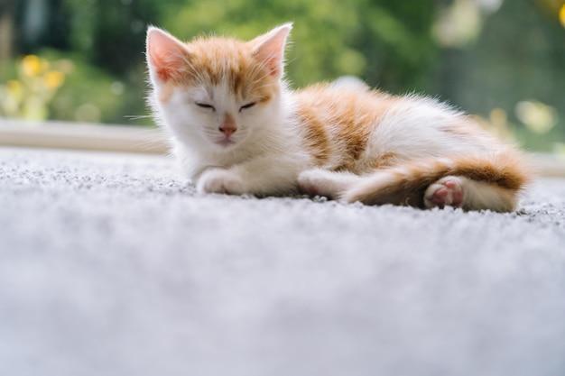 Nette kleine rote katze, die auf holzboden mit fenster sitzt. junge süße kleine rote katze. langhaariges ingwer-kätzchen spielen zu hause. nette lustige heimtiere. haustiere und junge kätzchen.