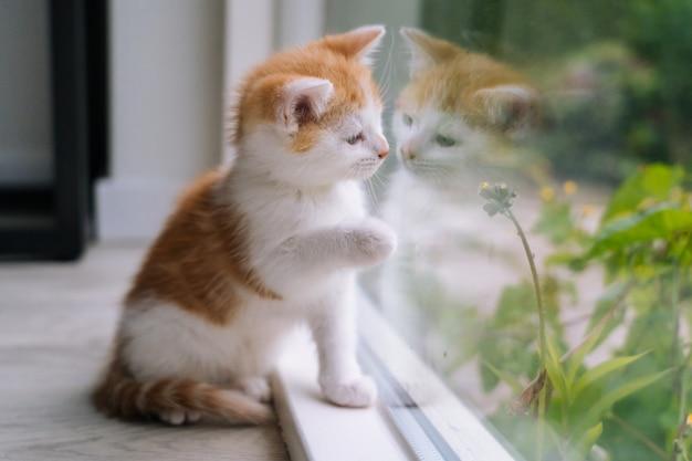 Nette kleine rote katze sitzen auf holzboden nahe fenster. junge kleine rote katze, die aus dem fenster schaut. ingwer-kätzchen, das sein spiegelbild im fenster betrachtet. süße haustiere. haustiere und junge kätzchen