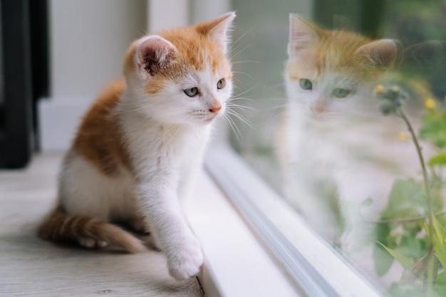 Nette kleine rote katze sitzen auf holzboden nahe fenster. junge kleine rote katze, die sein spiegelbild im fenster betrachtet. ingwer kätzchen. süße haustiere. haustiere und junge kätzchen. selektiver fokus.