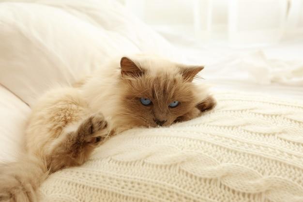 Nette lustige katze, die auf bett zu hause liegt