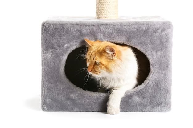 Nette lustige katze, die aus ihrem haus auf weißem hintergrund herauskommt