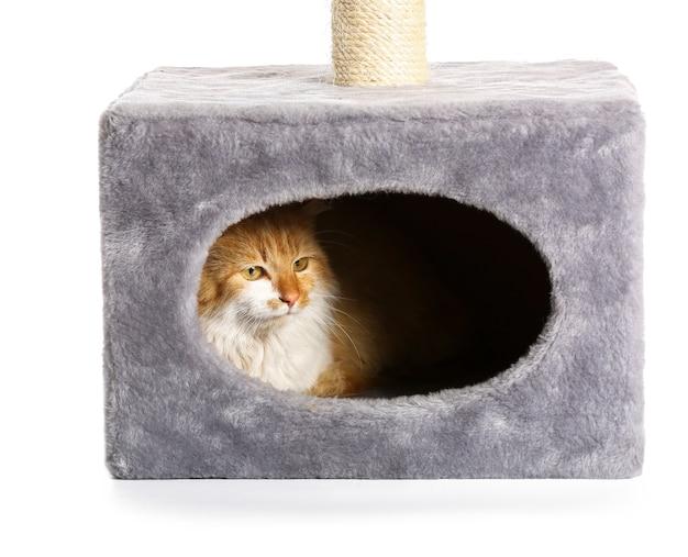 Nette lustige katze, die in seinem haus auf weißer oberfläche versteckt