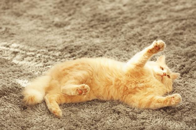 Nette lustige katze, die zu hause auf teppich liegt