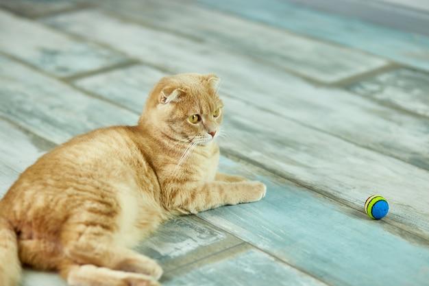 Nette lustige katze, die zu hause im zimmer auf dem boden liegt und auf den ball schaut