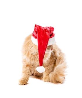Nette lustige katze in weihnachtsmütze auf weißer wand