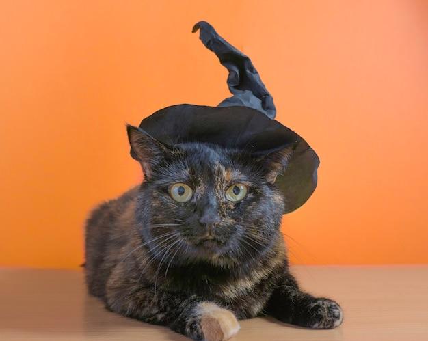 Nette mehrfarbige katze in einem hexenhut auf einem orangefarbenen hintergrund. halloween-urlaub.