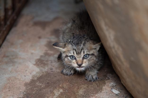 Nette neugeborene kätzchenkatze haben angstgesicht unter gebäude