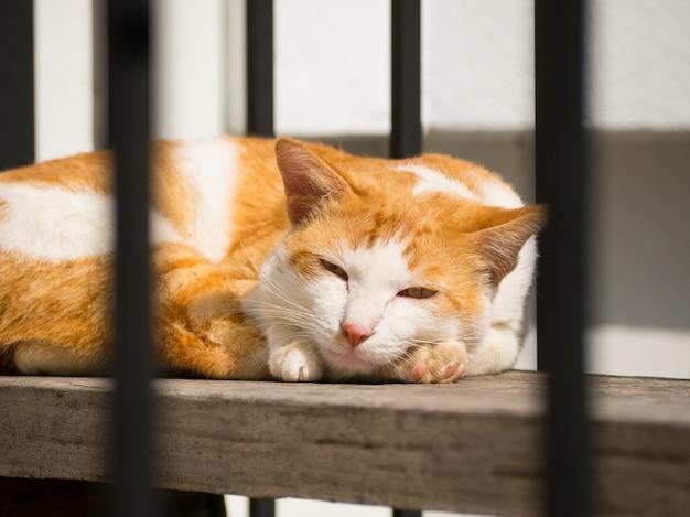 Nette orange katze, welche die kamera schläft und betrachtet