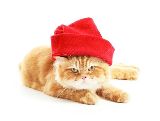 Nette rote perserkatze in strickmütze auf weißem hintergrund