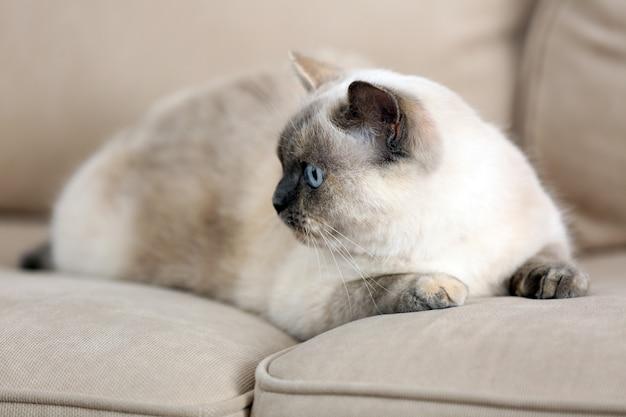 Nette schöne katze, die auf sofa zu hause liegt