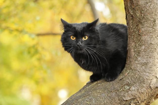 Nette schwarze katze auf baum im herbstpark