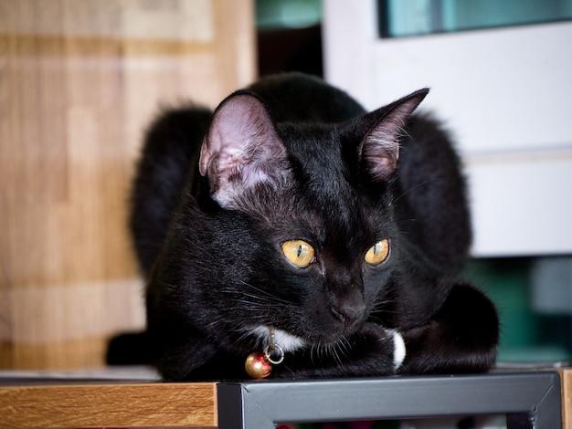Nette schwarze katze auf regal