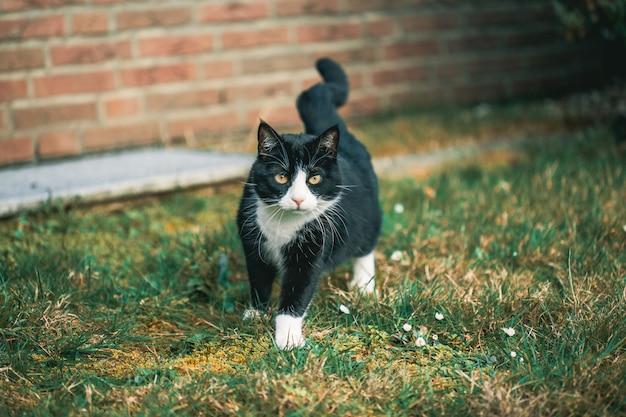 Nette schwarze katze, die die kamera auf dem gras vor einer wand anstarrt