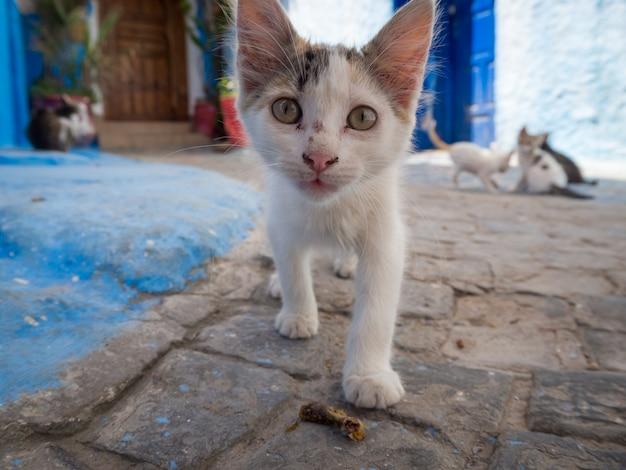 Nette streunende katze, die auf den straßen von rabat, marokko geht