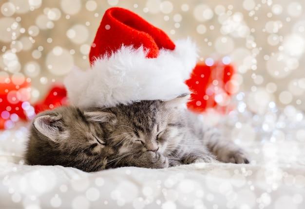 Nette tabbykätzchen, die zusammen in weihnachtsmütze mit unscharfen schneelichtern schlafen. weihnachtsmann-hut auf hübscher babykatze. weihnachtskatzen. haustiere im kostüm zu neujahr weihnachten.