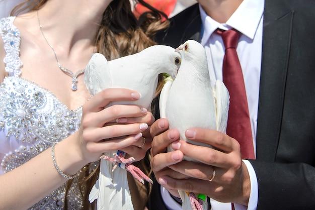 Nette weiße hochzeitstauben in den händen der braut und des bräutigams schließen nah an einem sonnigen tag