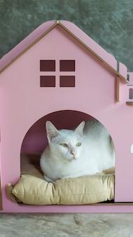 Nette weiße katze im kleinen rosa haus.
