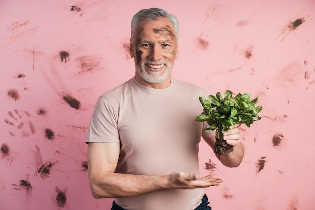 Netter, älterer mann an einer wand einer schmutzigen rosa wand, die ein basilikum hält