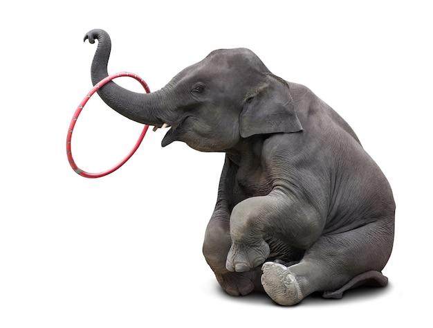 Netter babyelefant, der hulahoop spielt, lokalisiert auf weiß mit beschneidungspfad